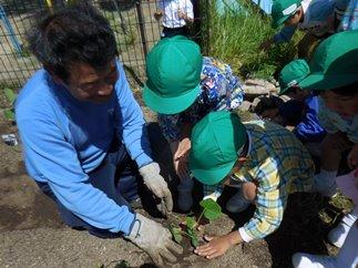 野菜の苗を植えたよ!:画像3