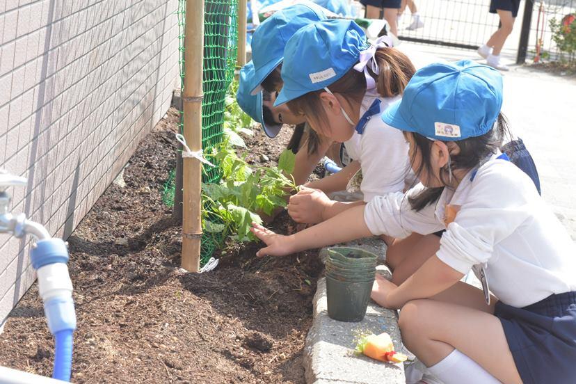 ゴーヤの苗を植えました♪:画像3