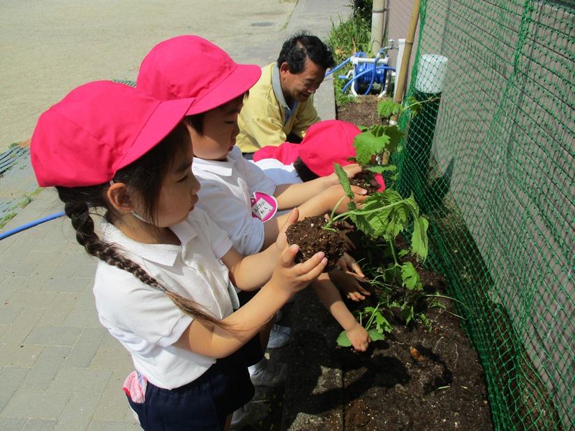 ゴーヤの苗を植えました♪:画像2