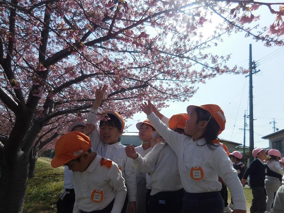 年少☆河津桜をみにいったよ:画像2
