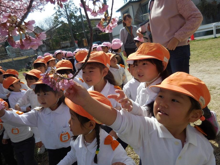 年少☆河津桜をみにいったよ:画像3
