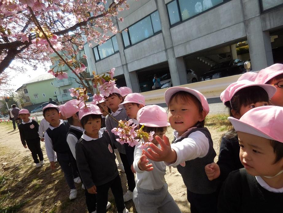 年少☆河津桜をみにいったよ:画像5