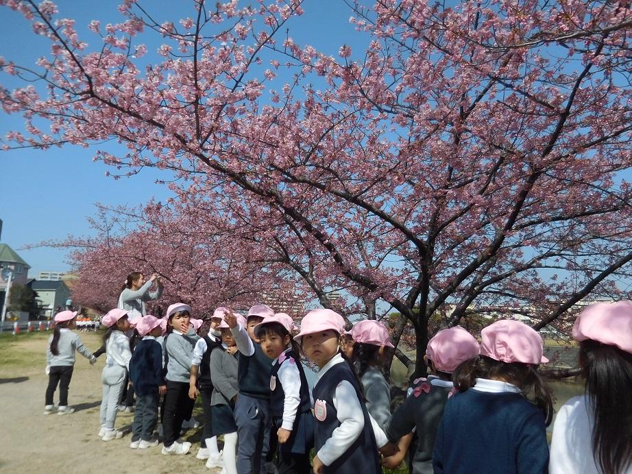 年少☆河津桜をみにいったよ:画像6