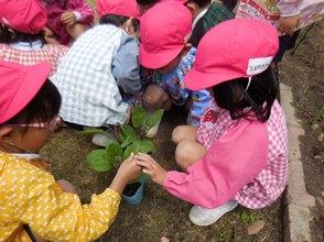 野菜の苗を植えたよ!:画像2