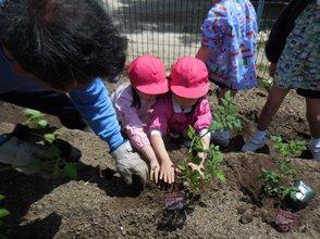 野菜の苗を植えたよ!:画像5