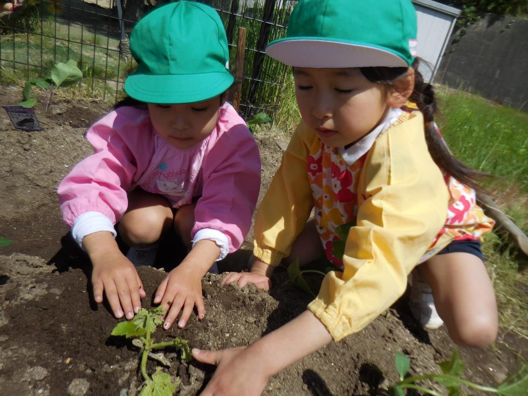 野菜の苗を植えたよ!:画像6