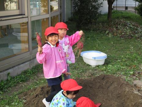サツマイモ掘りをしたよ! ~年中児~:画像6