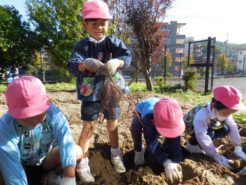芋掘りをしました☆年中・年長☆:画像5