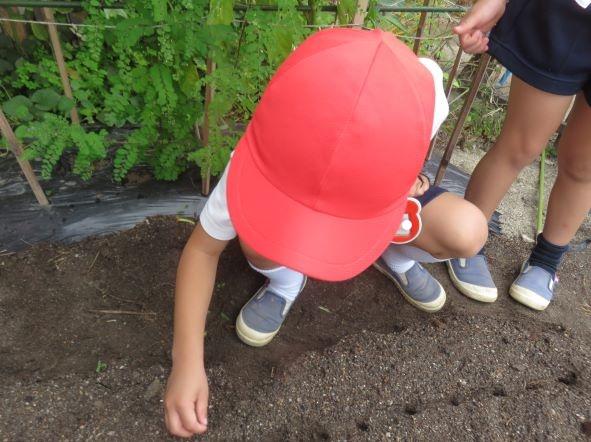 大根の種を蒔きました♪:画像4