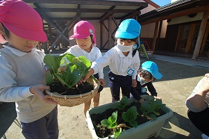 ★年中★ 冬野菜の収穫第1弾!
