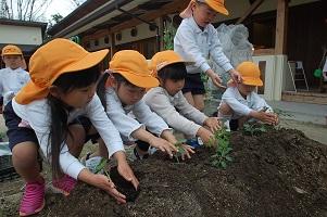 ☆年長☆ 夏野菜を植えたよ:画像3