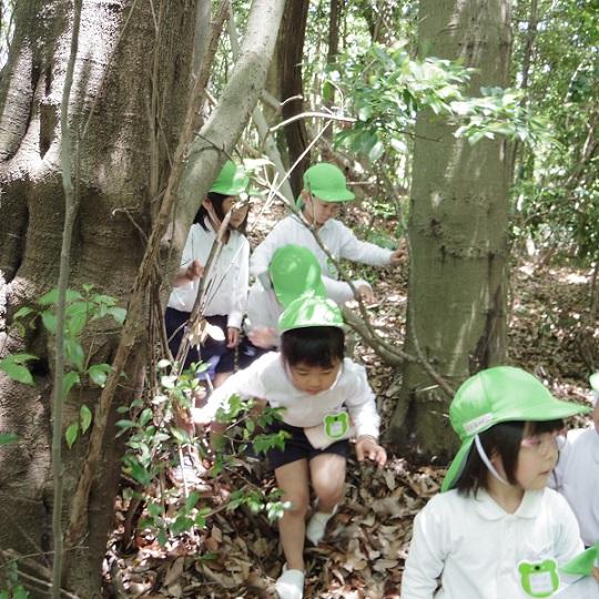 ☆アスレチックの森に行ったよ☆年中:画像3