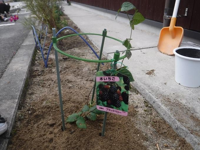 木苺の苗を植えました♪★年少