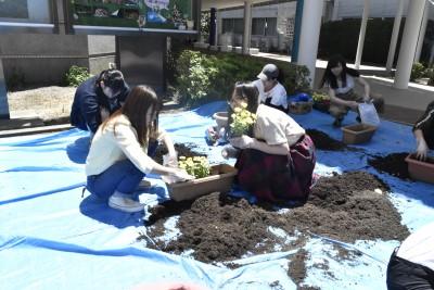 学生生活向上委員の皆さんが花の植え替えをしました。:画像1
