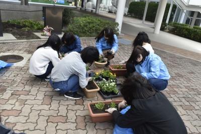 学生生活向上委員の皆さんが花を植えました。:画像2