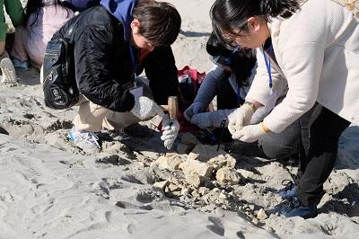 「化石を発掘しよう」の開催報告!:画像2